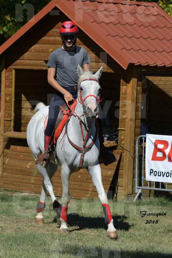 Fête du cheval à GRAULHET le 16 septembre 2018 - Présentation de chevaux Arabe Elevage de GACIA - 02