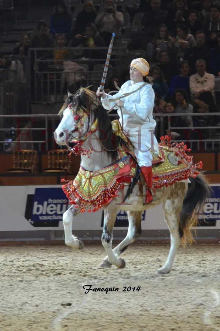 Show des races - Chevaux BARBE 02