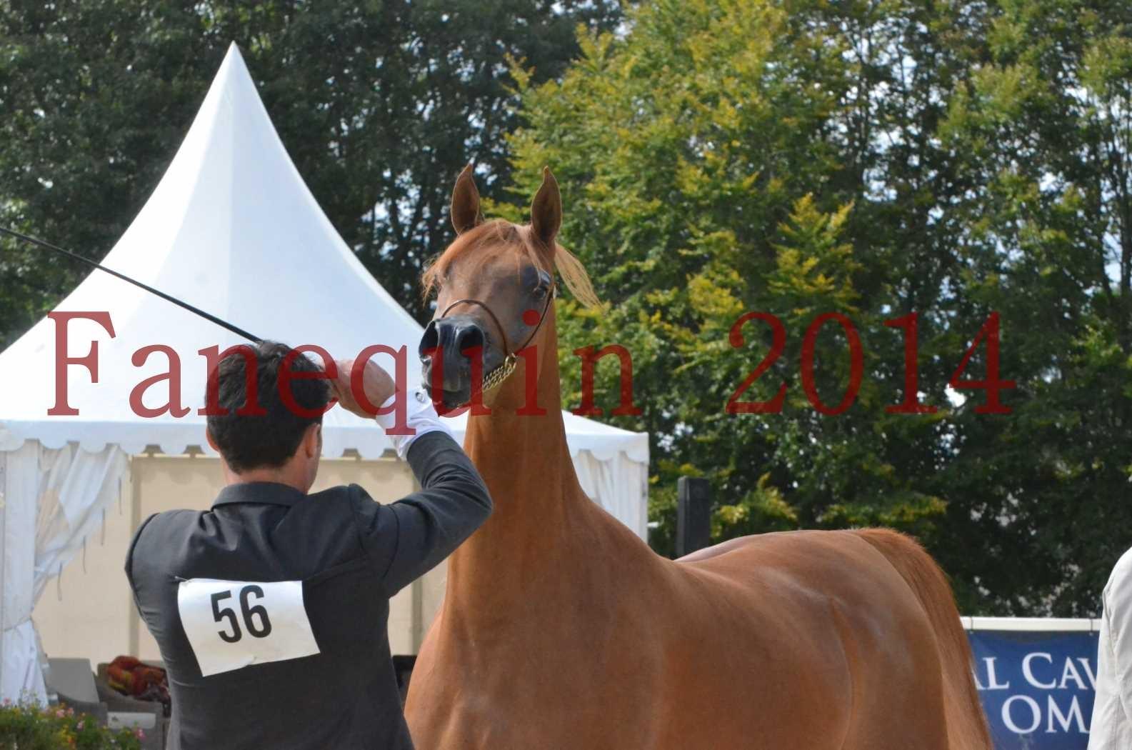 CHAMPIONNAT DE FRANCE 2014 A POMPADOUR - Sélection - LUTFINAH JA - 45