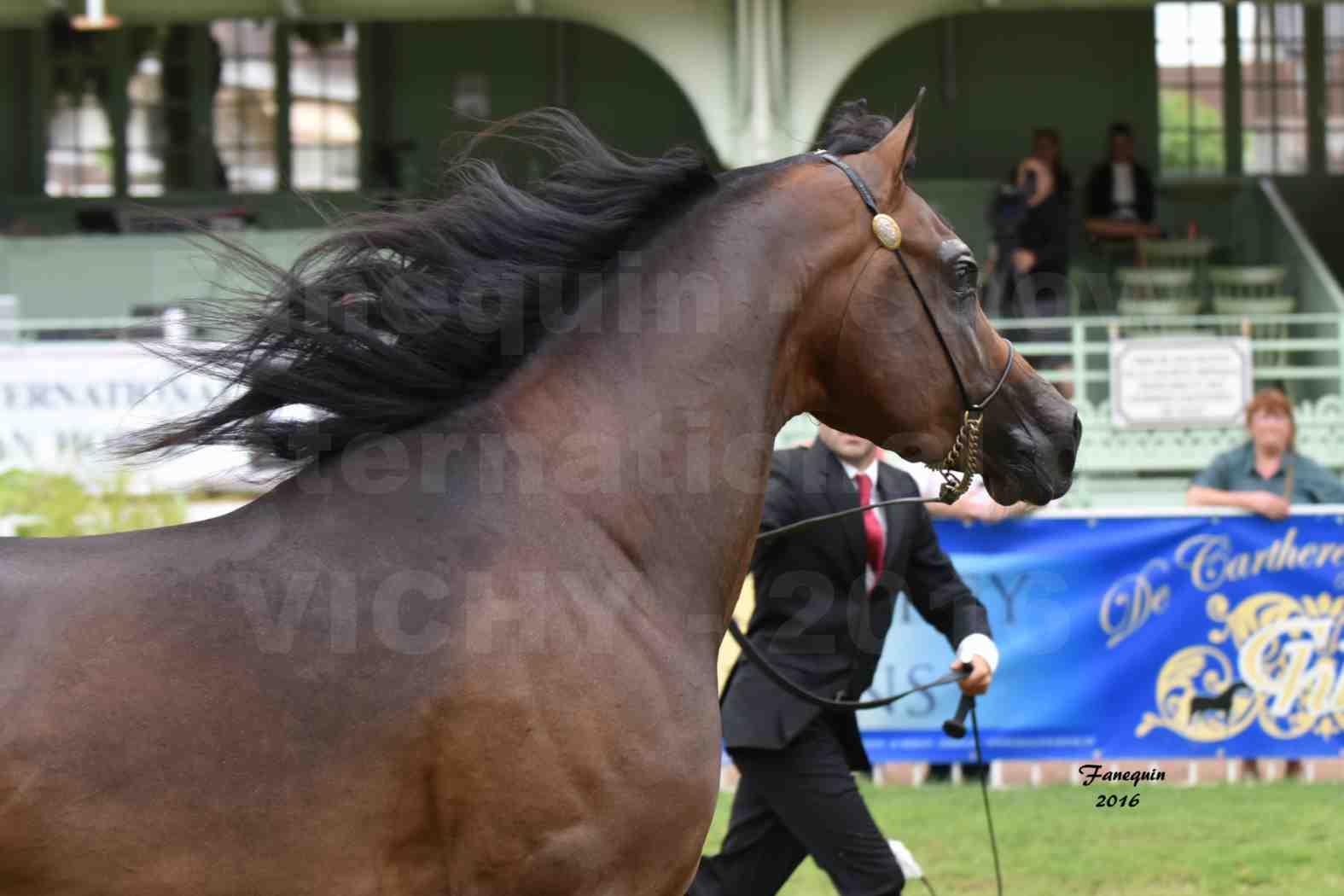 International Arabian Horse Show B de VICHY 2016 - MILLIAR - Notre Sélection - Portraits - 1