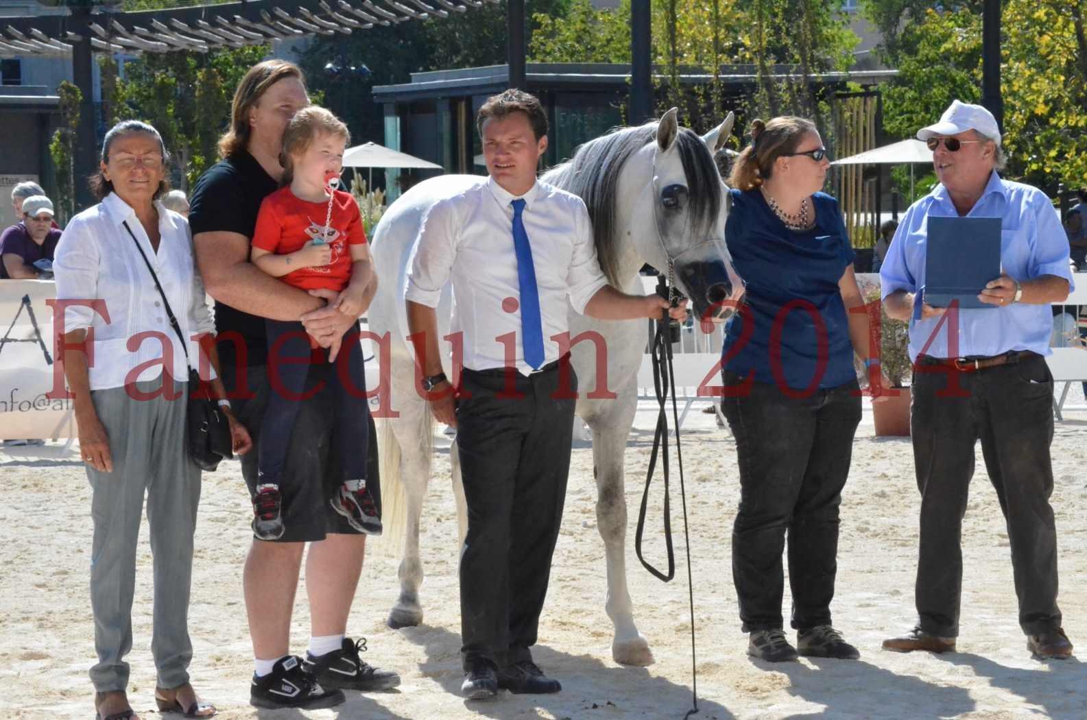 Concours National de Nîmes de chevaux ARABES 2014 - Sélection - SHAOLIN DE NEDJAIA - 91