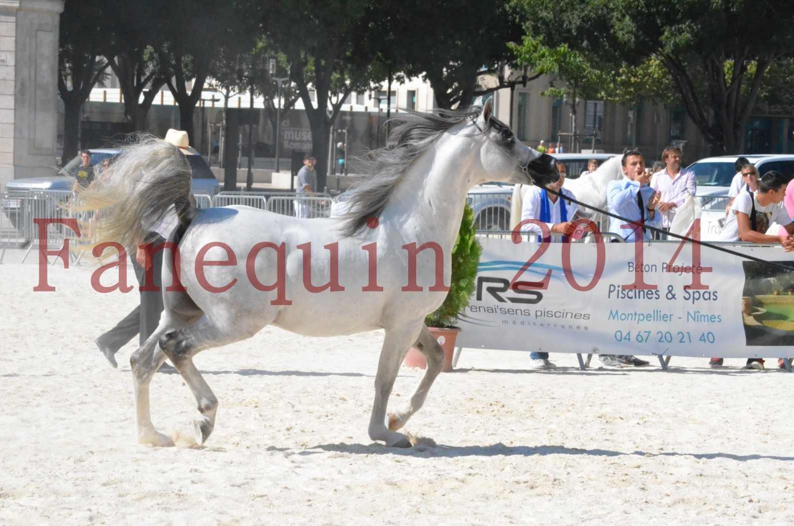 Concours National de Nîmes de chevaux ARABES 2014 - Sélection - SHAOLIN DE NEDJAIA - 20