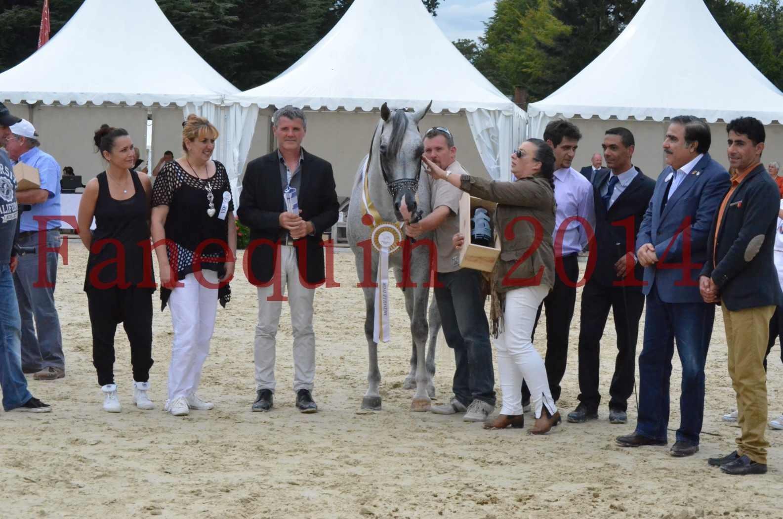 CHAMPIONNAT DE FRANCE  2014 A POMPADOUR - Championnat - SHEYK DE GARGASSAN - 22