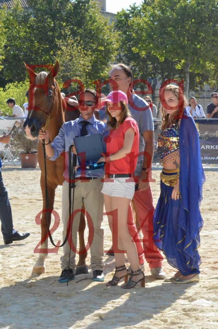Concours National de Nîmes de chevaux ARABES 2014 - Championnat - MASSAI DE BARREL - 04