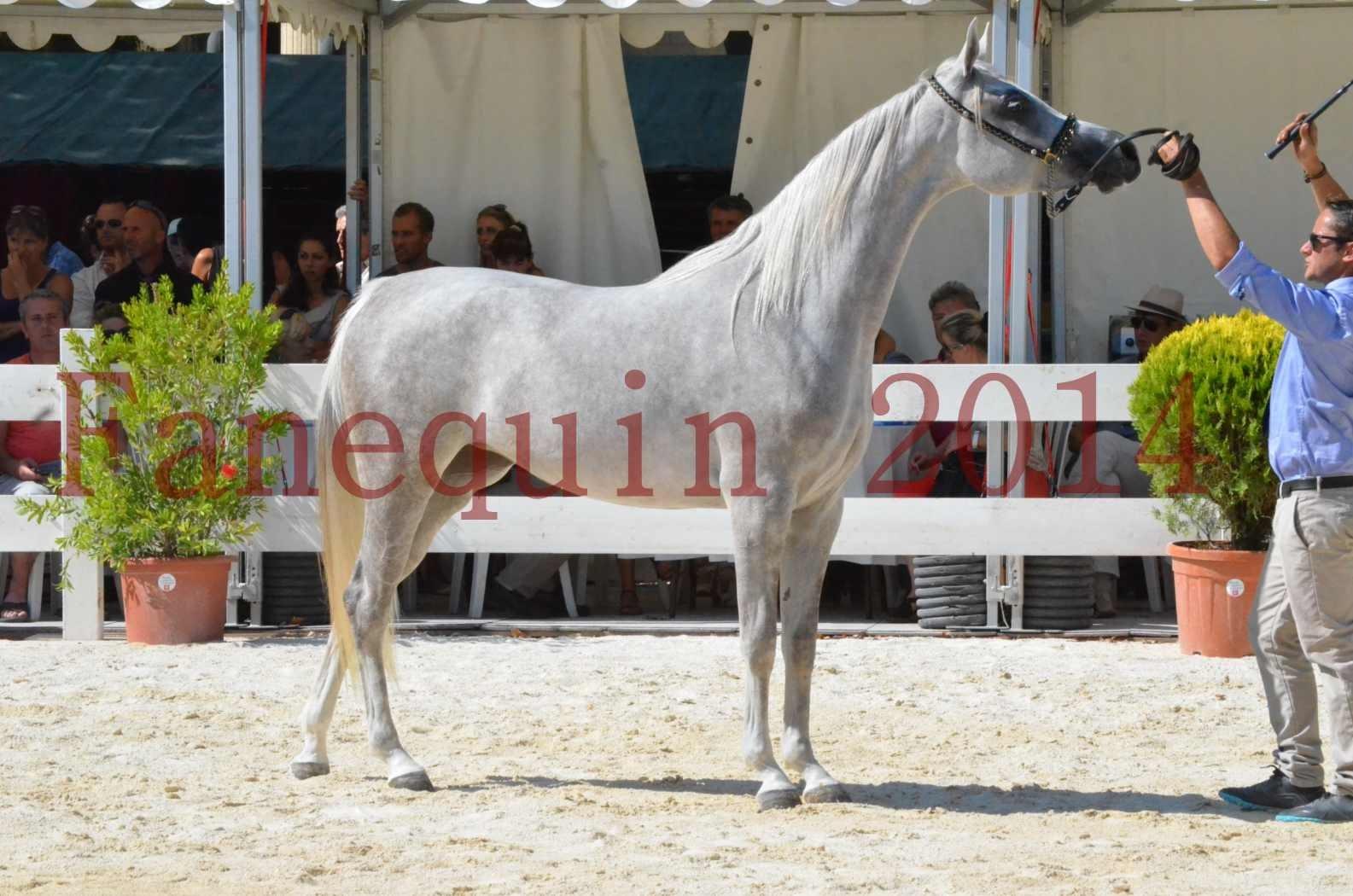 Concours national de Nîmes 2014 - Championnat Femelles Juniors - VOLODIA DE LAFON - 18