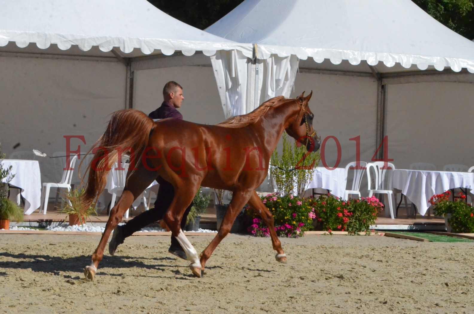 Championnat de FRANCE 2014 - Amateurs - SELECTO IBN SAMAWI - 051