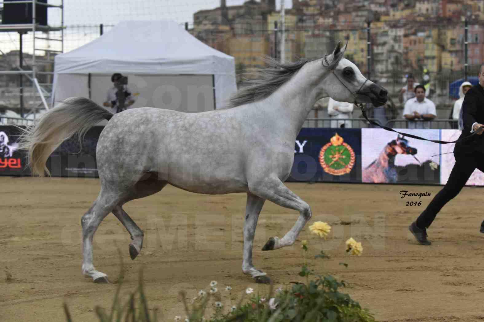 Championnat du pur-sang arabe de la Méditerranée et des pays arabes - MENTON 2016 - BINT HAZY AL KHALEDIAH - 5
