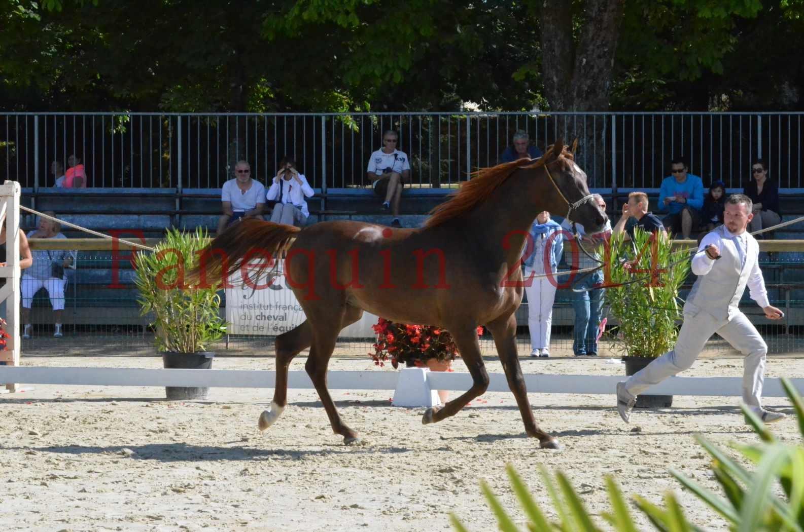 Championnat de FRANCE 2014 - Amateurs - LAMAL - 29