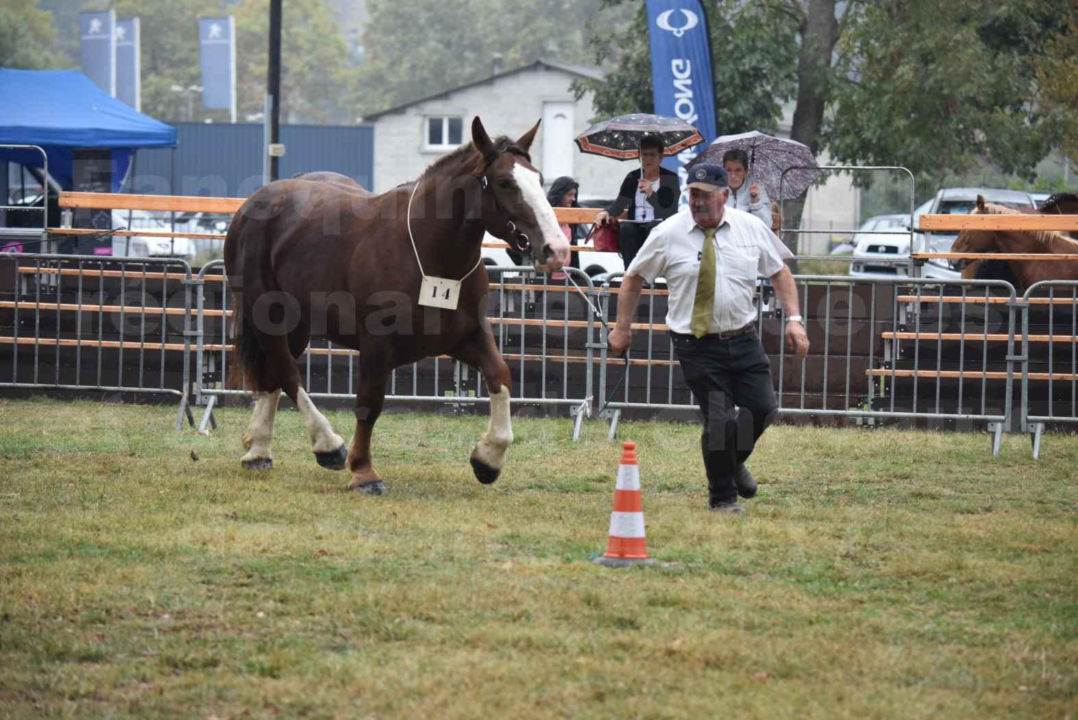 Concours Régional de chevaux de traits en 2017 - Trait BRETON - FRIVOLE DU JAUDY - 13