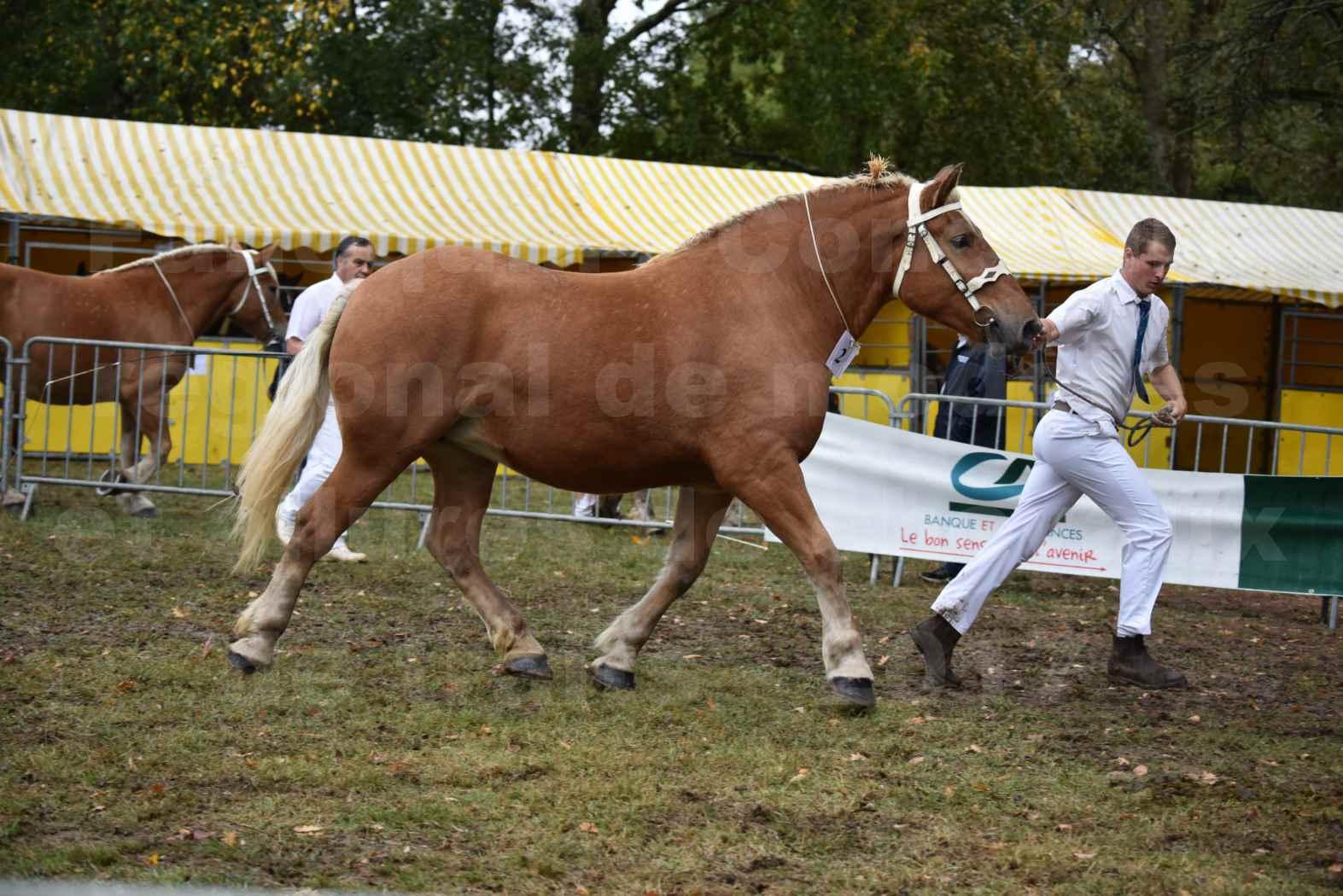 Concours Régional de chevaux de traits en 2017 - Pouliche Trait COMTOIS - EGLANTINE 28 - 02