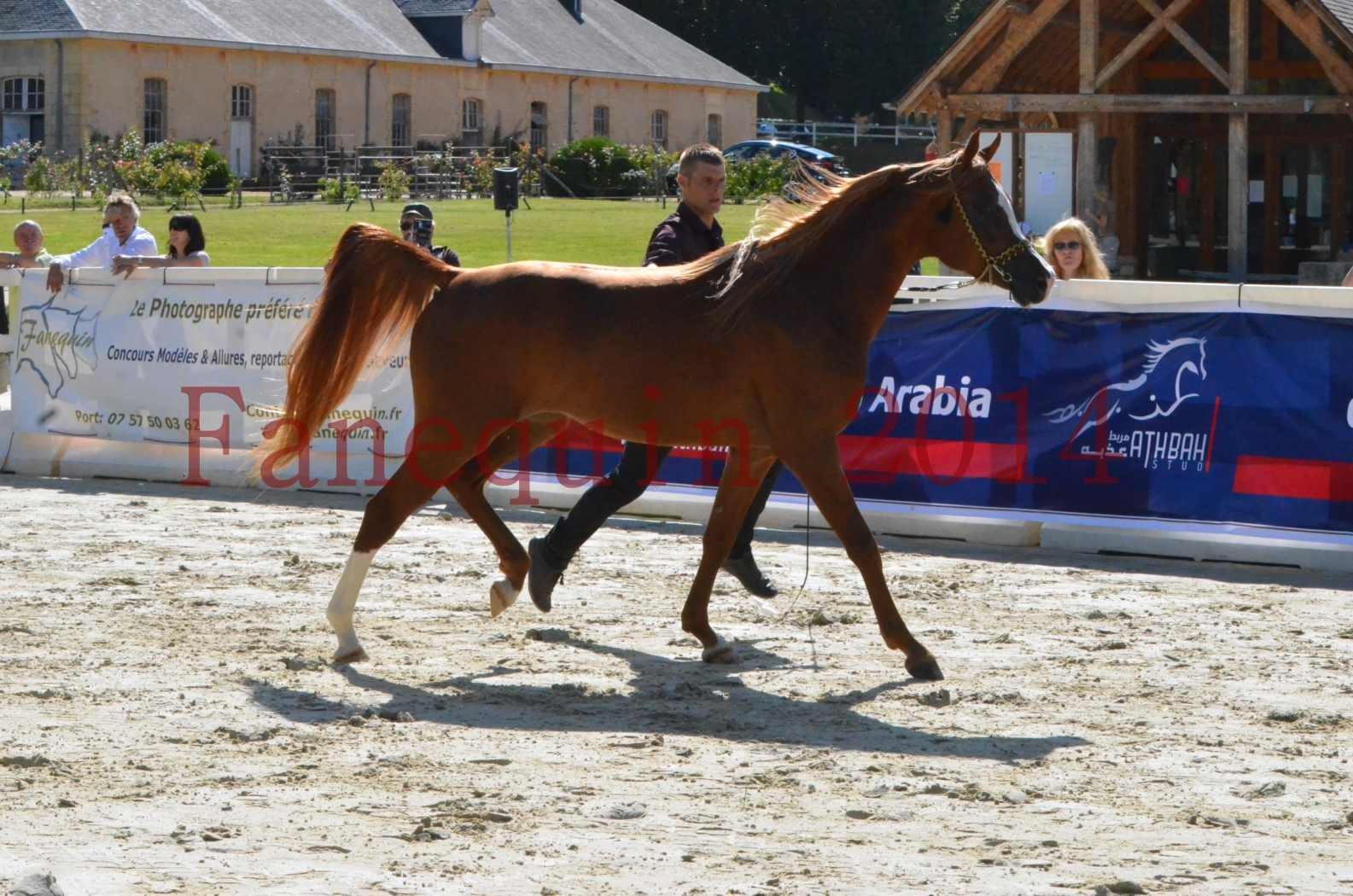 Championnat de FRANCE 2014 - Amateurs - SELECTO IBN SAMAWI - 010