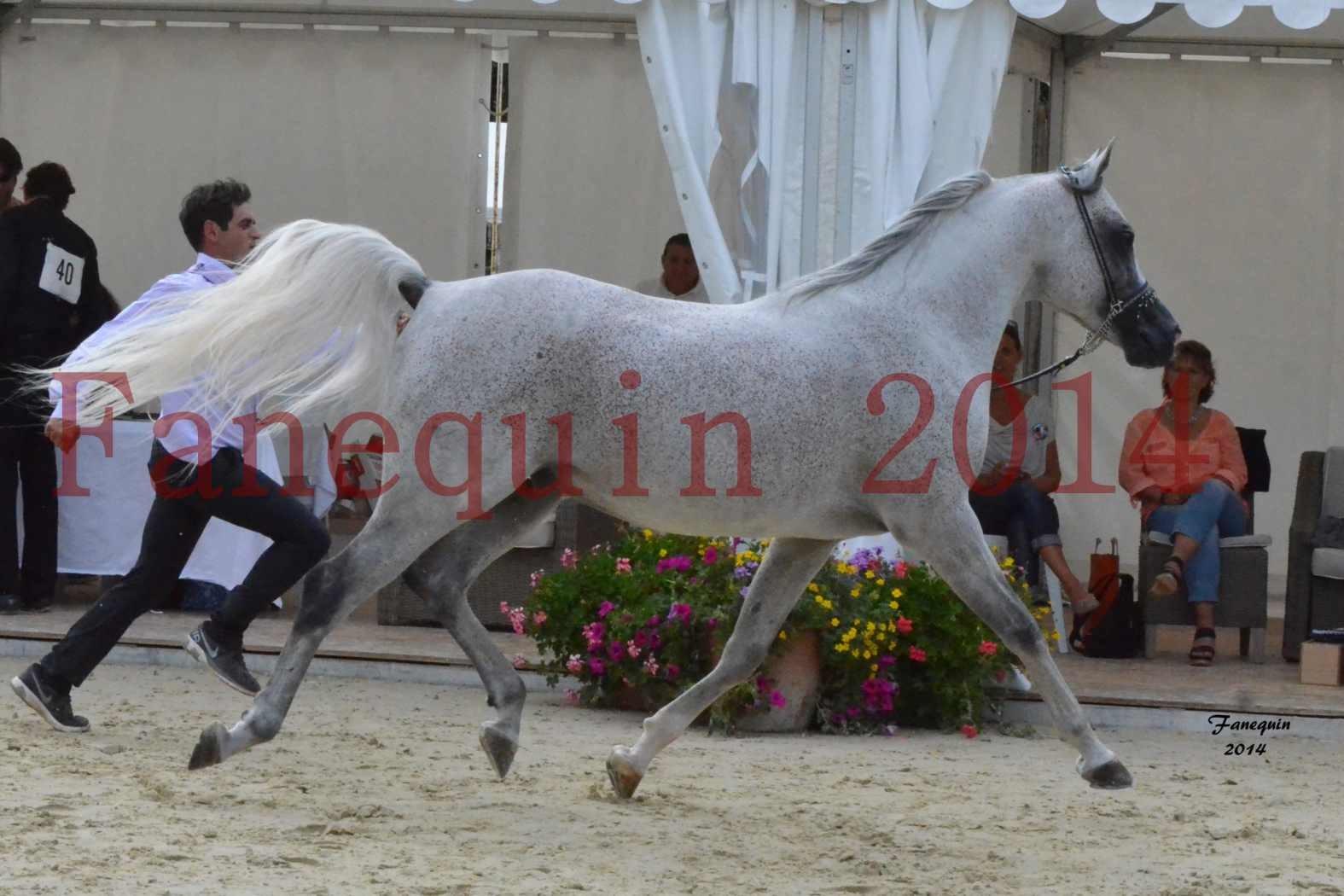 CHAMPIONNAT DE FRANCE  2014 A POMPADOUR - Notre Sélection - SHEYK DE GARGASSAN - 04