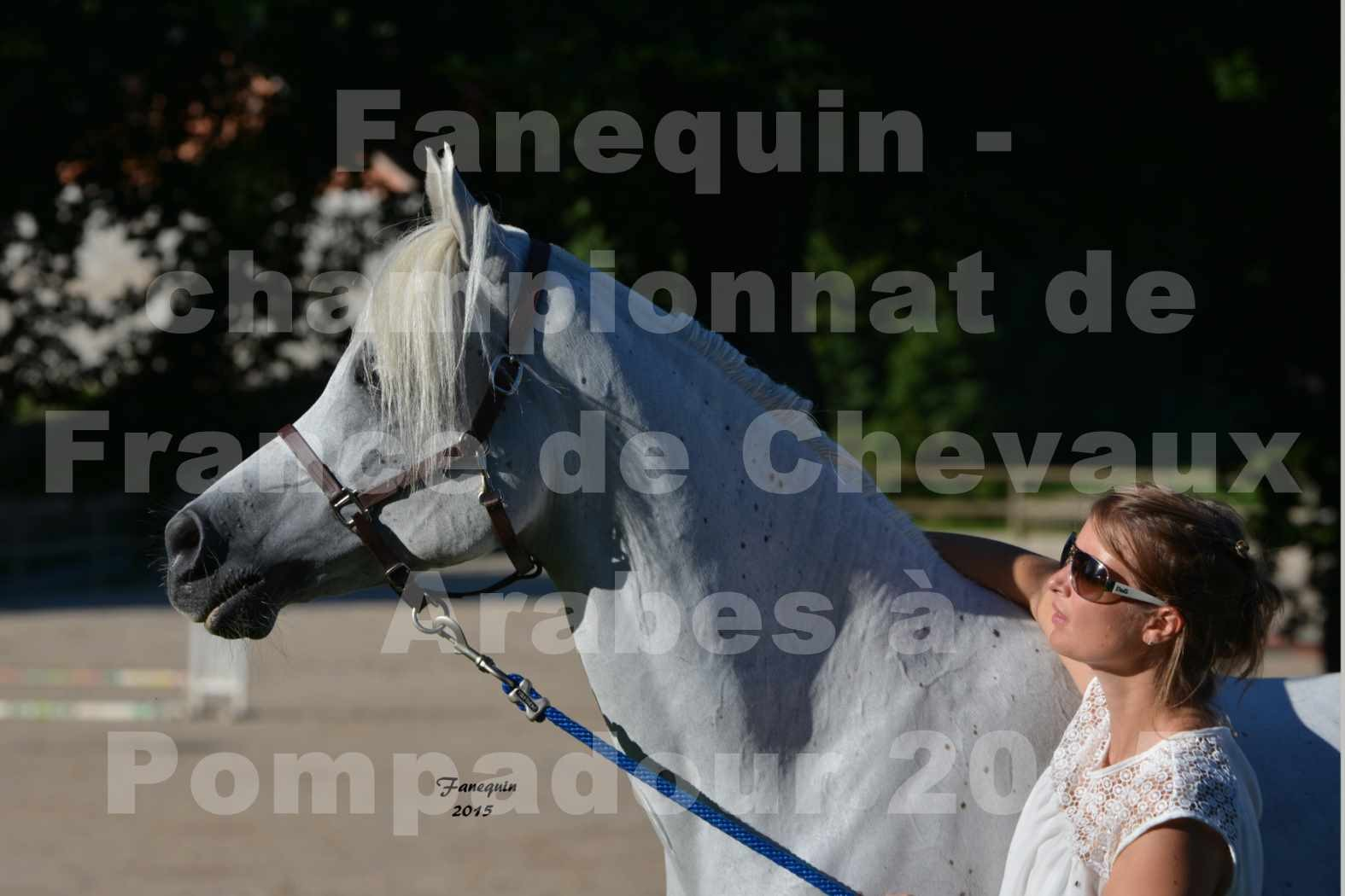 Championnat de FRANCE du cheval ARABE à POMPADOUR 2015 - Classes PROFESSIONNELS - Portraits - HAADJA - 2