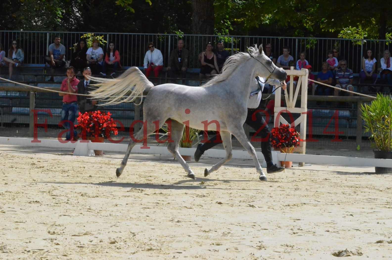 Championnat de FRANCE 2014 - Amateurs - VOLODIA DE LAFON - 022