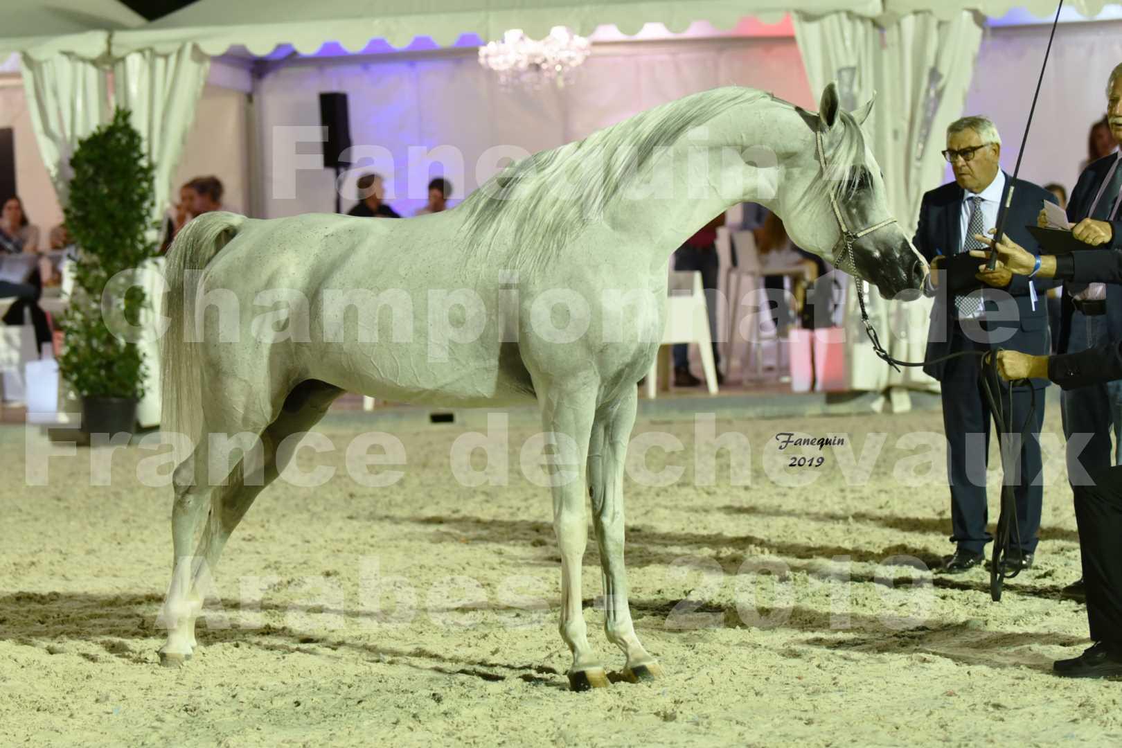 Championnat de France des chevaux Arabes en 2019 à VICHY - SHAMS EL ASHIRAF - 5