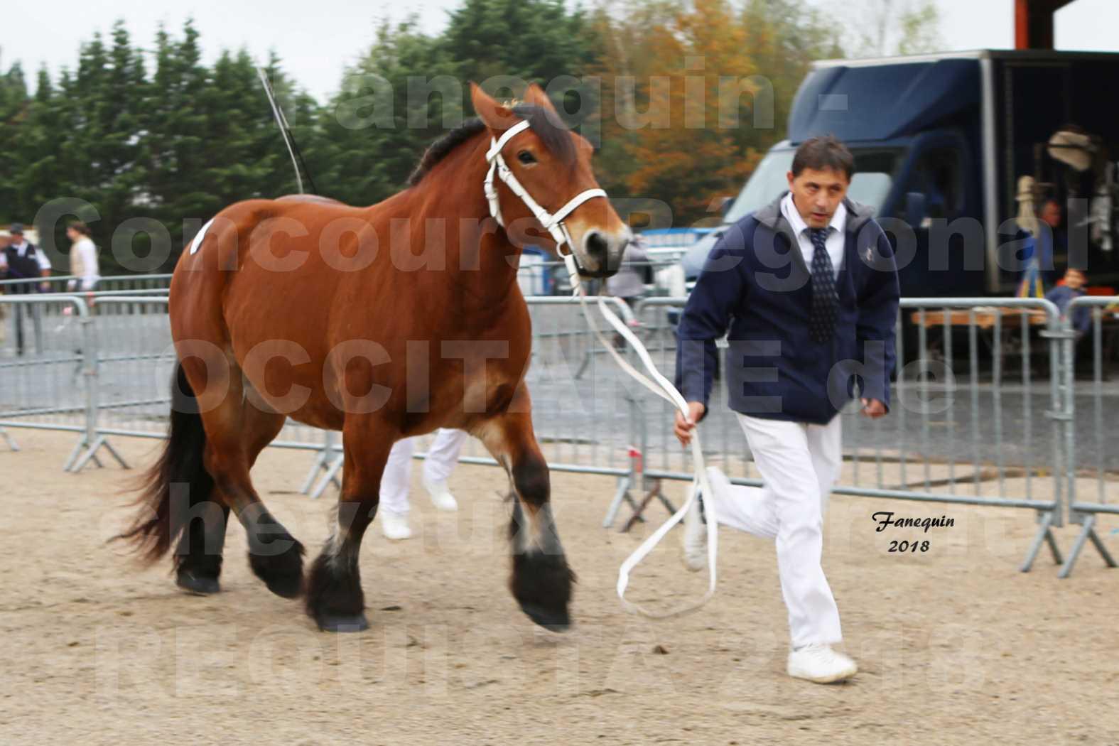 Concours Régional OCCITANIE de chevaux de traits à REQUISTA - COMETE DE GRILLOLES - 1