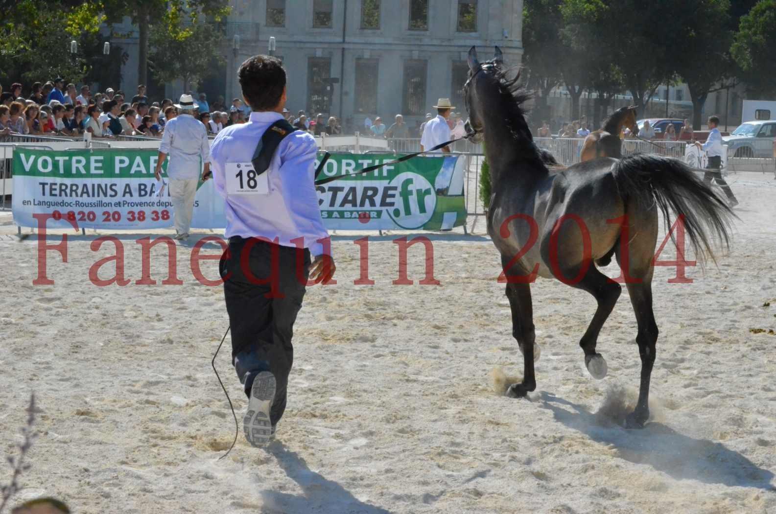 Concours National de Nîmes de chevaux ARABES 2014 - Championnat - JOSEPH'S BOUZIOLS - C 17