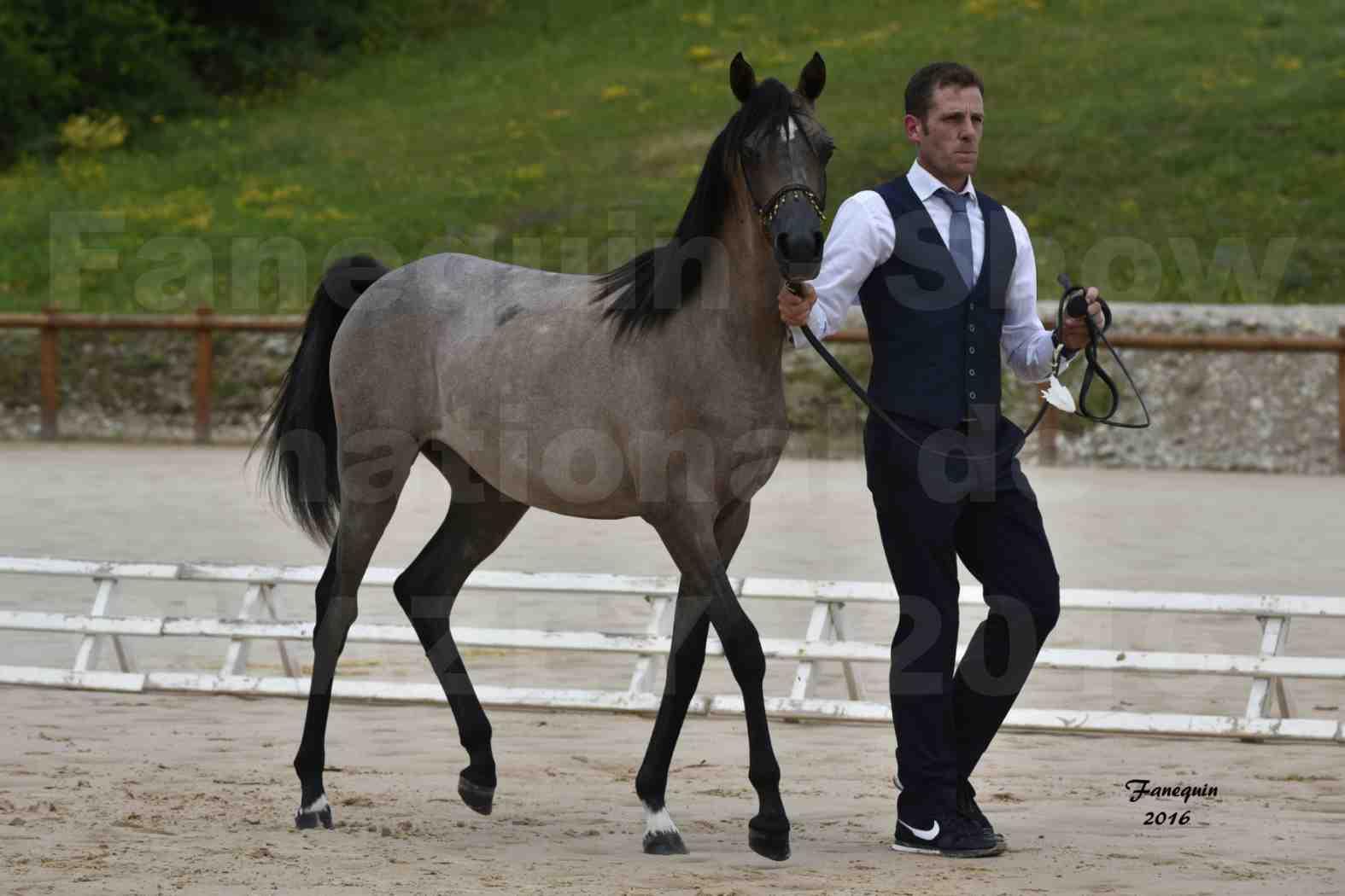 Show national de chevaux arabe de CHAZEY sur AIN - FALOUKA - 3