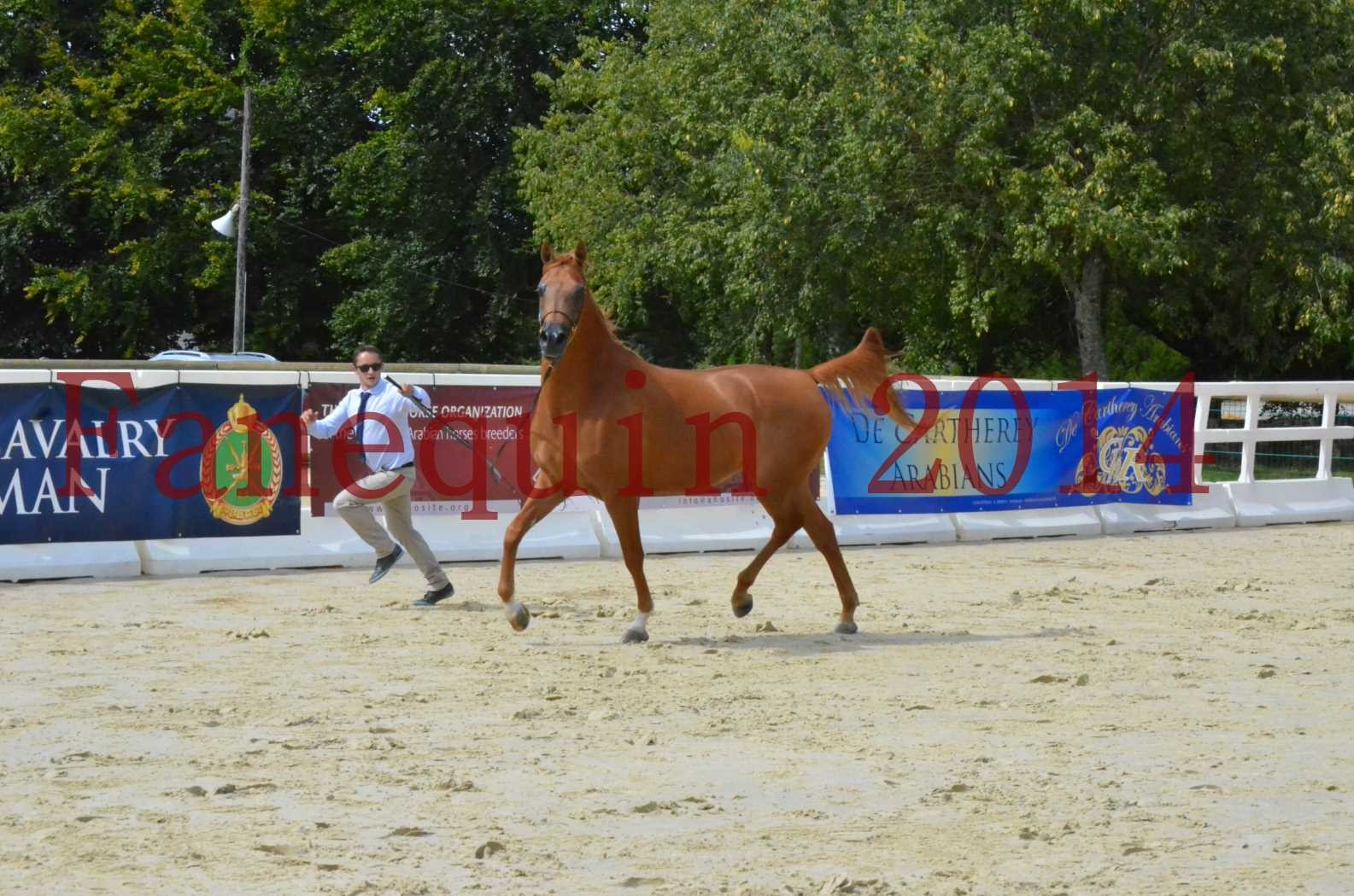 CHAMPIONNAT DE FRANCE 2014 A POMPADOUR - Championnat - LUTFINAH JA - 15