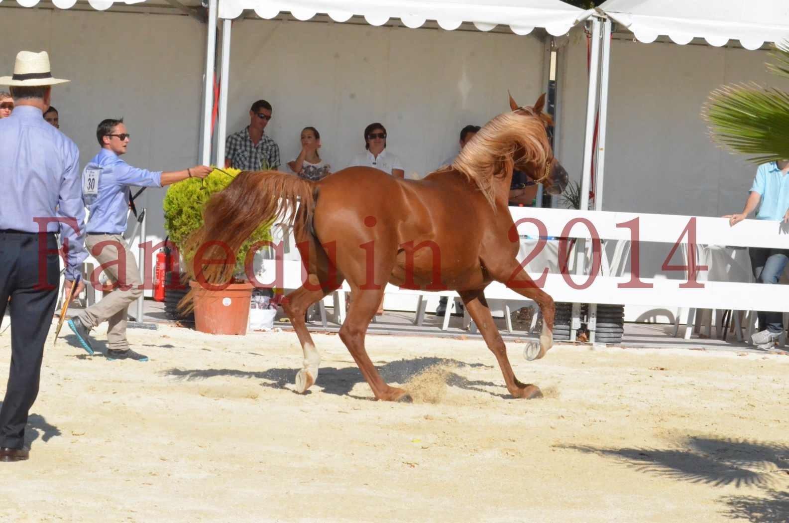 Concours National de Nîmes de chevaux ARABES 2014 - Championnat - MASSAI DE BARREL - 81