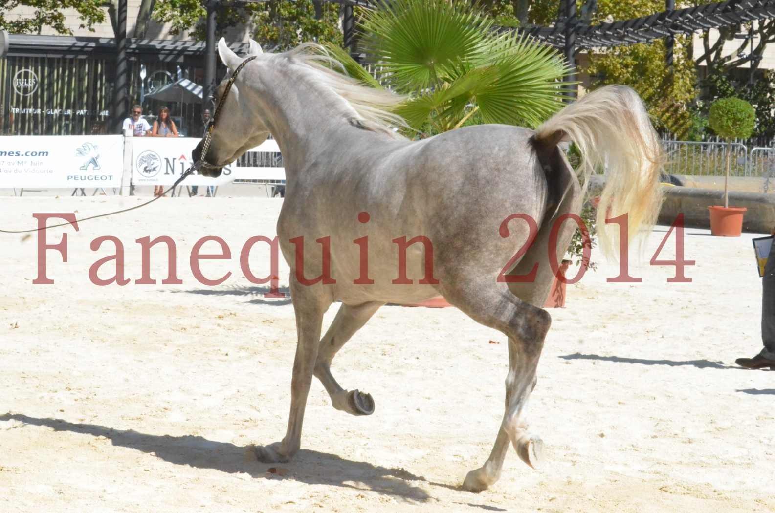 Concours national de Nîmes 2014 - Sélection - VOLODIA DE LAFON - 01