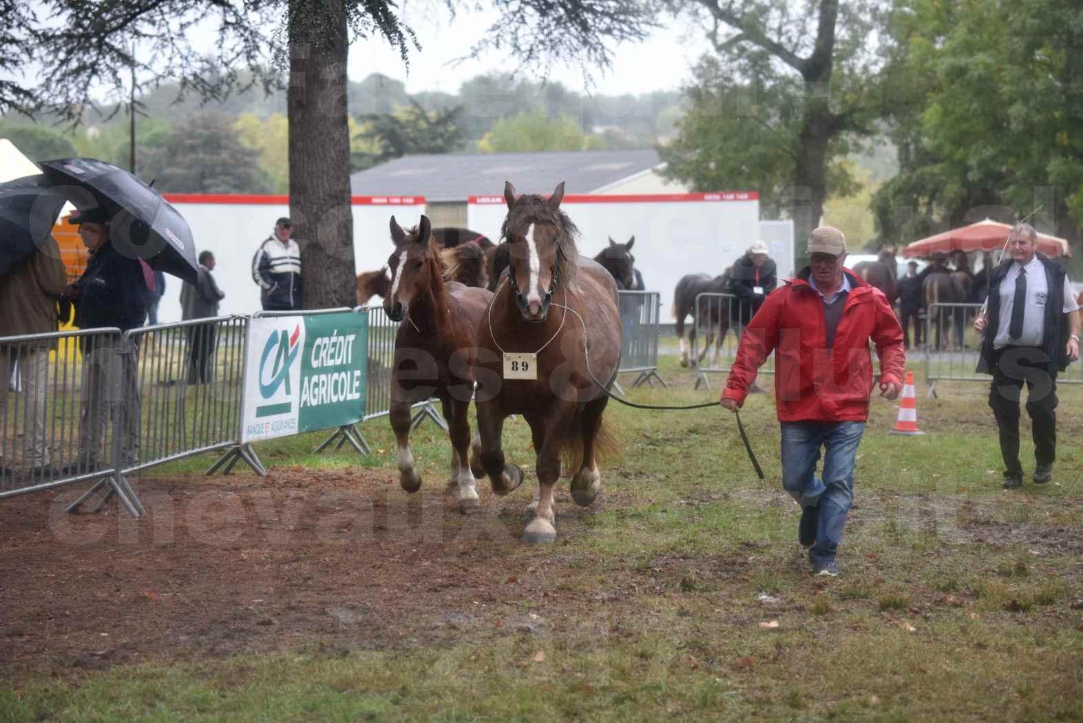 Concours Régional de chevaux de traits en 2017 - Jument Suitée - Trait BRETON - ULA DE BOUXOULIC - 06