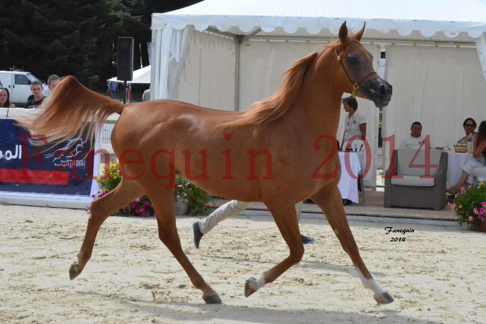 CHAMPIONNAT DE FRANCE 2014 A POMPADOUR - Notre Sélection - LUTFINAH JA - 26