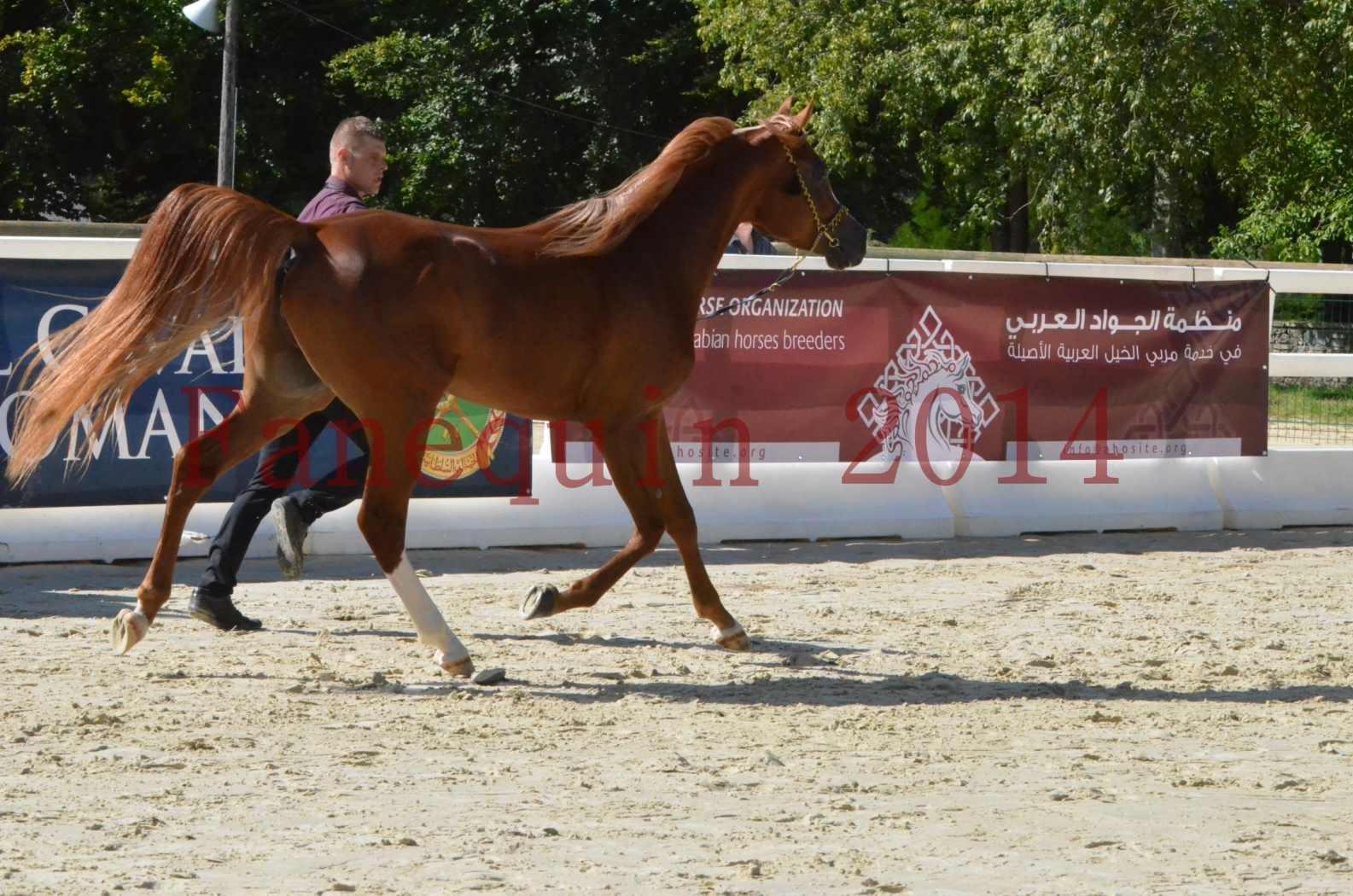 Championnat de FRANCE 2014 - Amateurs - SELECTO IBN SAMAWI - 014