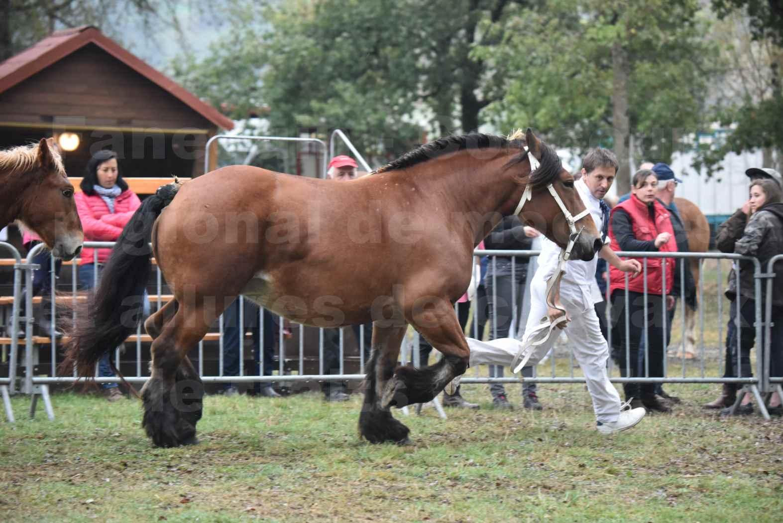 Concours Régional de chevaux de traits en 2017 - Jument & Poulain Trait COMTOIS - COMETE DE GRILLOLES - 18