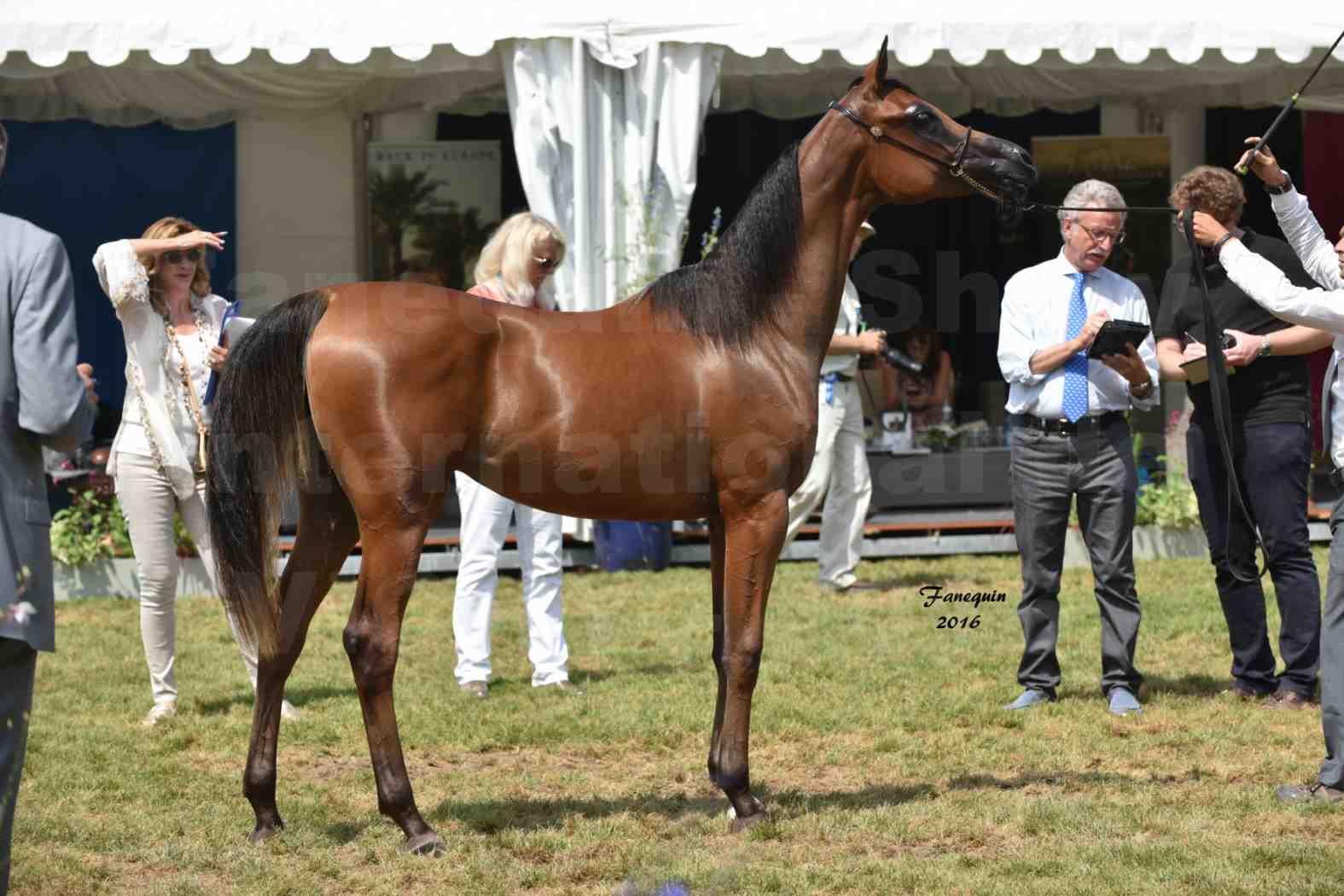 International Arabian Horse Show B de VICHY 2016 - ASRAR MS - Notre Sélection - 6