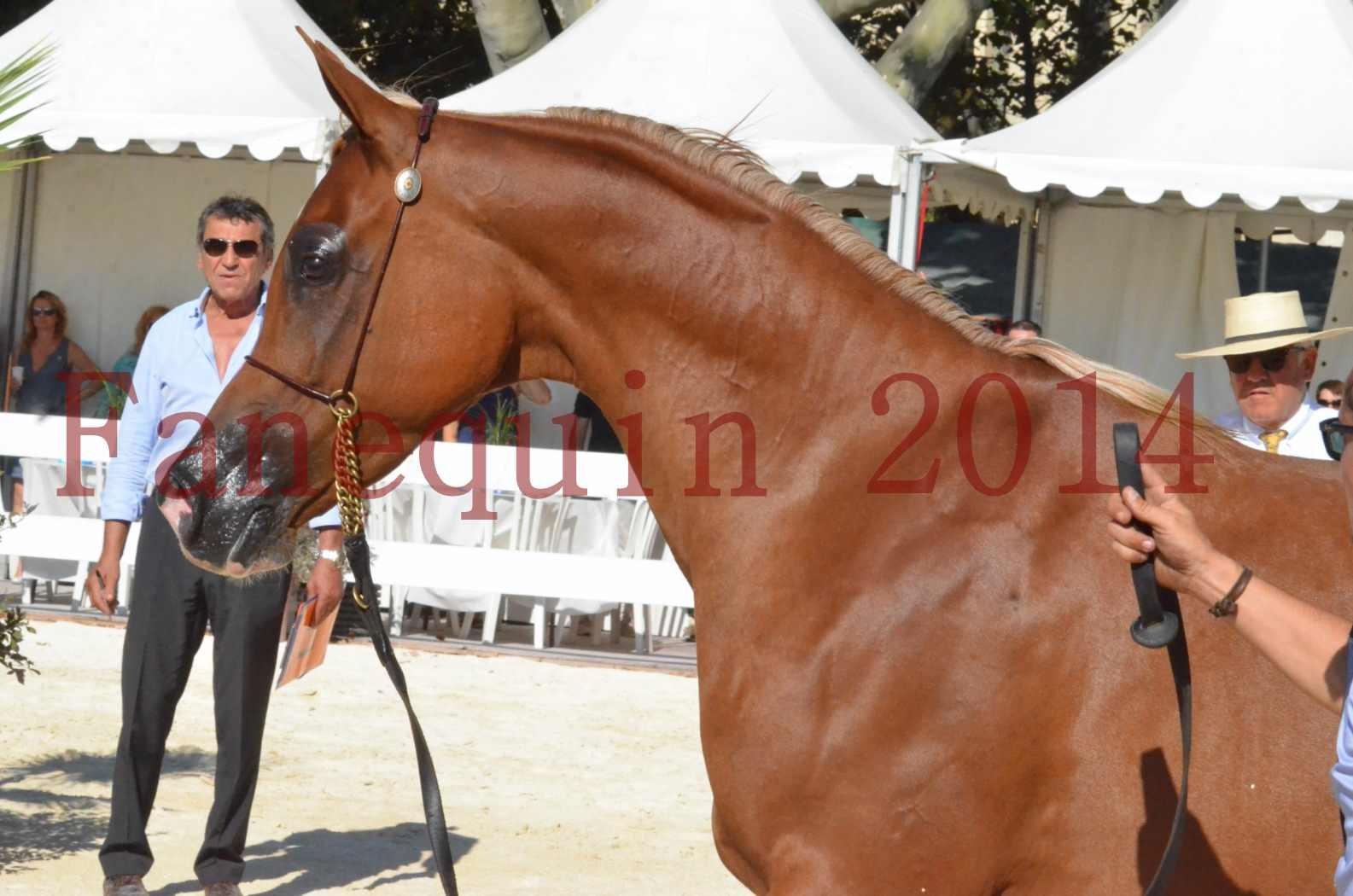Concours National de Nîmes de chevaux ARABES 2014 - Championnat - MASSAI DE BARREL - 65