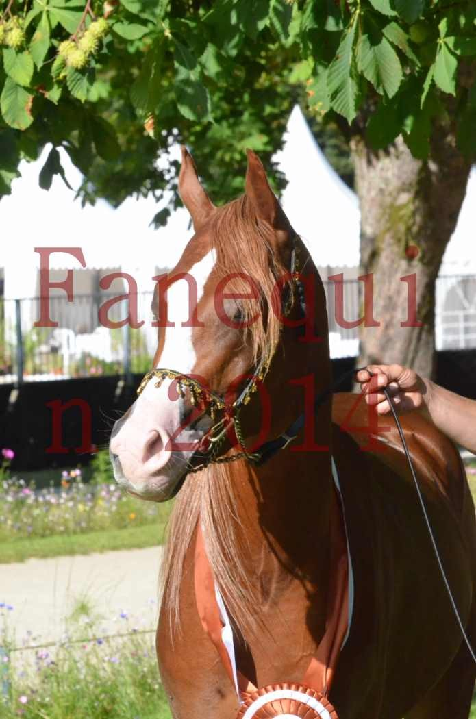 Championnat de FRANCE 2014 - Amateurs - SELECTO IBN SAMAWI - 207