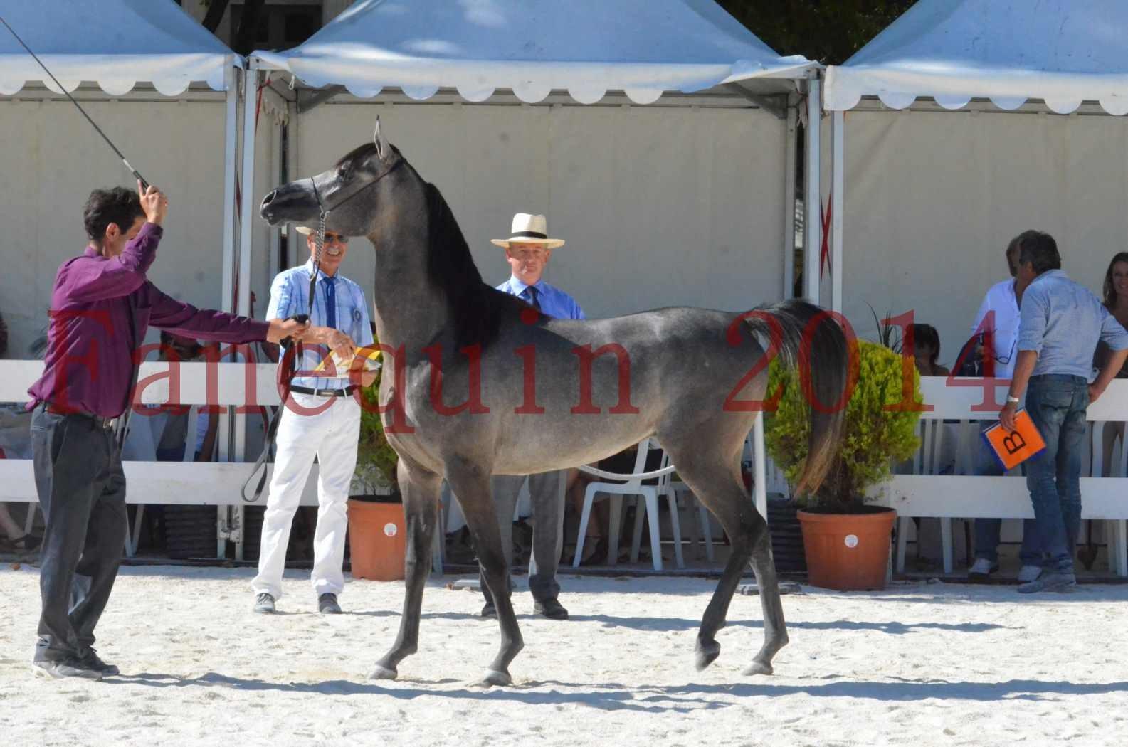 Concours National de Nîmes de chevaux ARABES 2014 - Championnat - JOSEPH'S BOUZIOLS - S 17