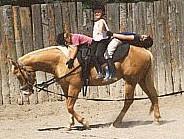 Quarter Horse Wallach Dunbar