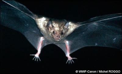 """photo TV5 monde """"les espèces en voie de disparition"""