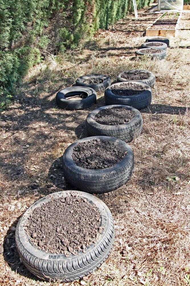 12 Essai de culture de pommes de terre dans des pneus
