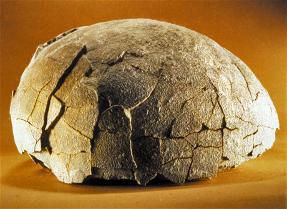 oeufs titanosaure fossilisés  photo Isabelle Mommens MHN Aix en Provence