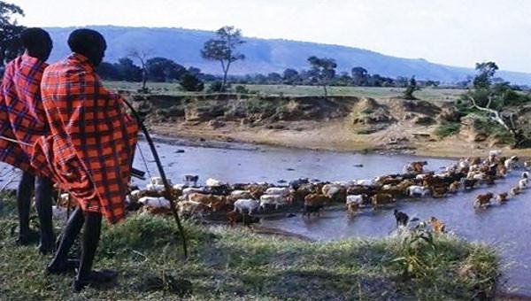Maasaï et leurs troupaux http://rythmesafriqueracines.com/2012/09/11/les-maasai-ce-peuple-original/