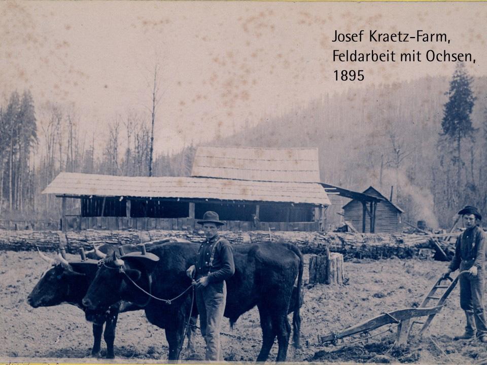 Josef Kraetz-Farm, Feldarbeit mit Ohsen, 1895