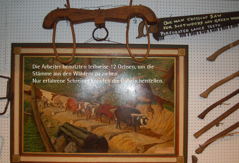 Die Arbeiter benutzten teilweise 12 Ochsen, um die Stämme aus den Wäldern zu ziehen. Nur erfahrene Schreiner konnten die Gabeln herstellen.
