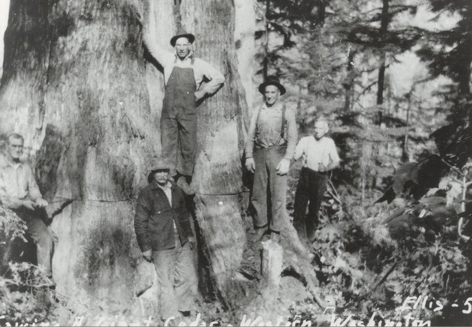 Holzarbeiter beim Fällen der Zedernbäume, Ende 19. Jh.