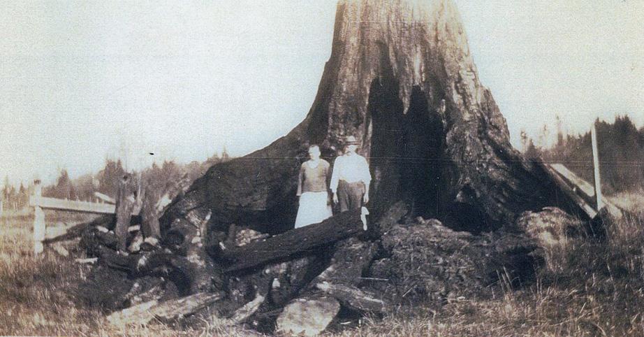 Anton und Rose Krätz beim Entfernen der Baumstümpfe auf ihrer Farm, 1920
