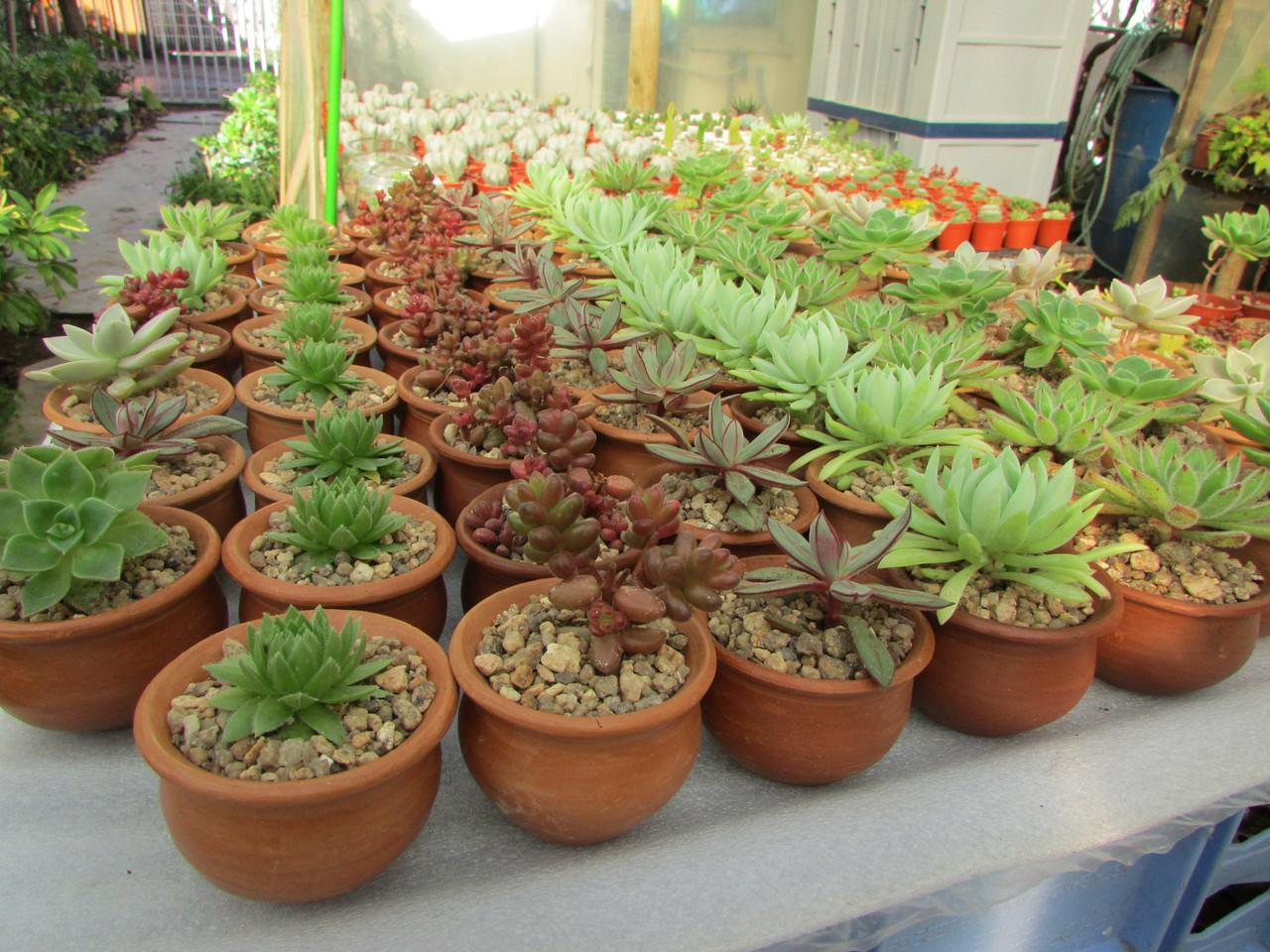 Cactus matrimonio evento vivero nacimiento cactus y for Vivero de cactus