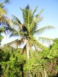 O terreno em S.Cruz Cabrália, Bahia
