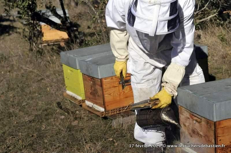 enfumoir avant d'ouvrir la ruche bastien Alise apiculteur en Cévennes