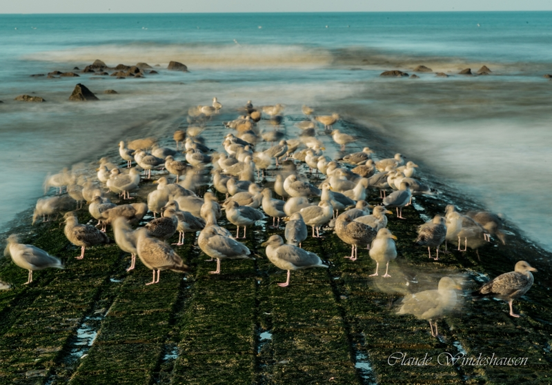 Seagulls at the North sea