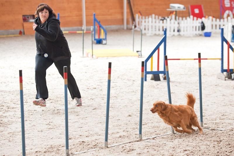 (c) Walter Hupfer www.agility-fotos.de