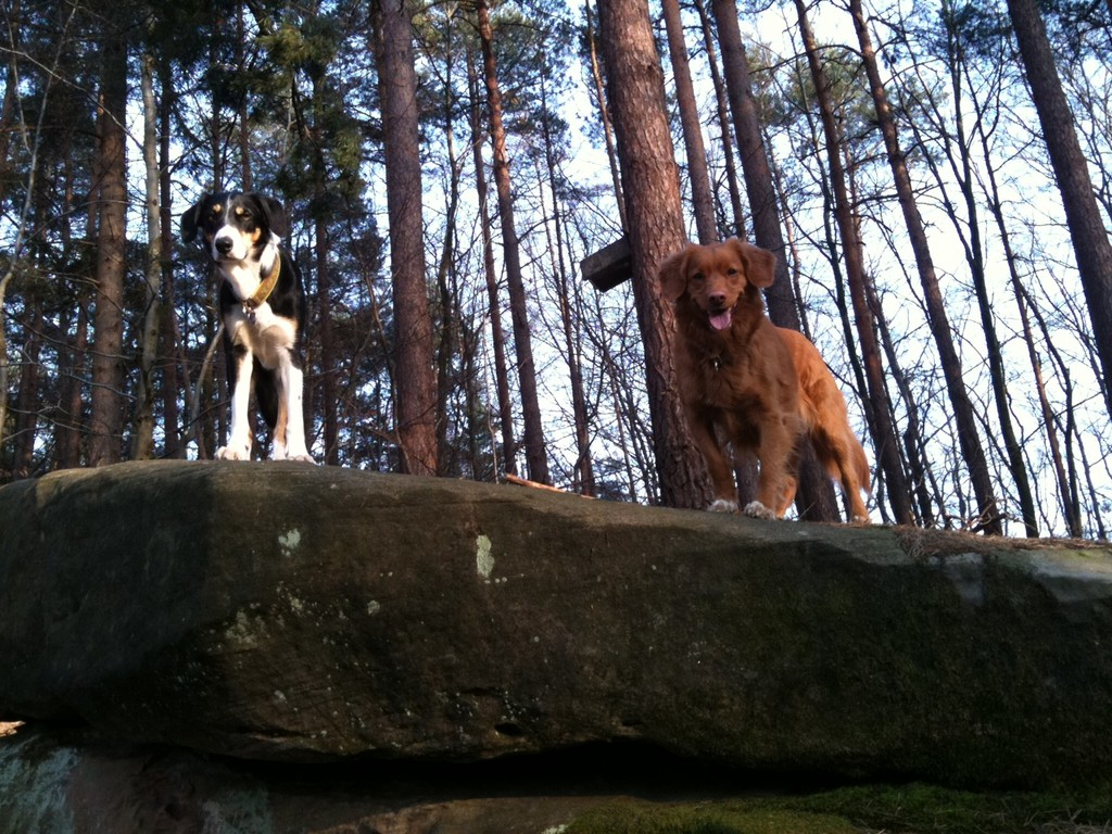 Hollye & Django