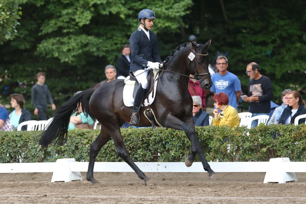 Rhenium & Ignasi Nicolau auf dem Weg zur Bronzemedaille im Championat der vierjährigen Hengste