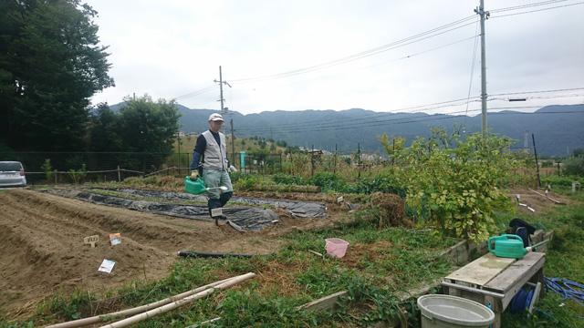 (収穫体験会に向けて、作物を育てる)